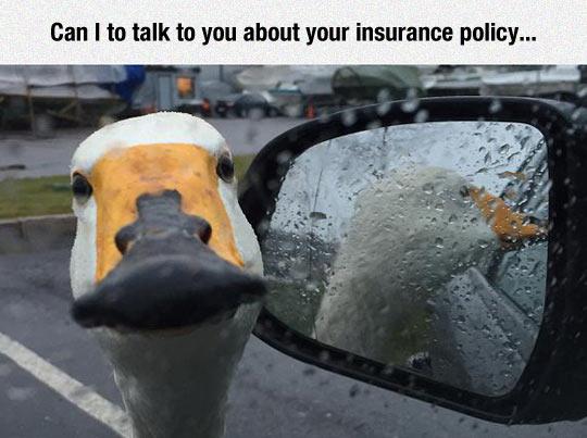Oh Hi, Excuse Me Good Sir