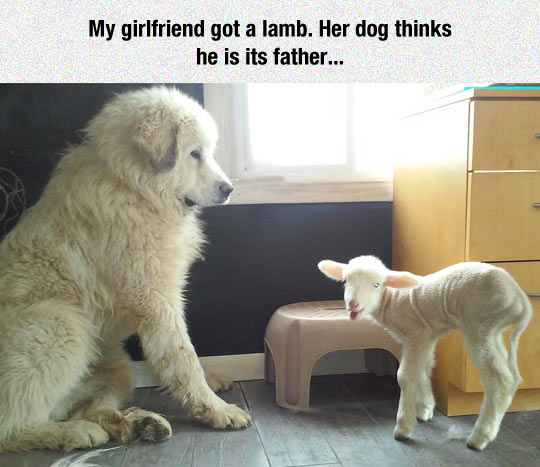 Lamb, I Am Your Father