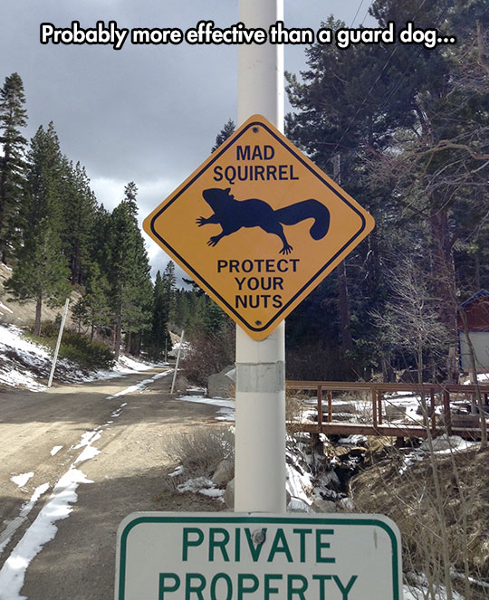 funny-mad-squirrel-road-sign