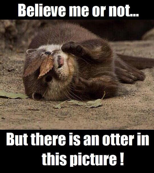 funny-otter-picture-ninja-leaf