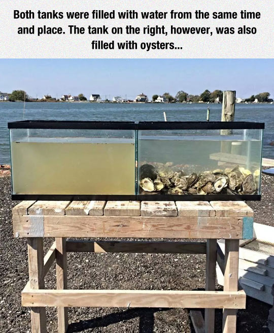 funny-oysters-tank-water-filter