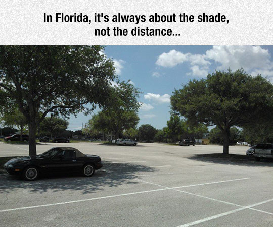 All About The Shade