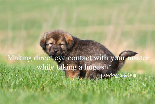 funny-puppy-eye-contact-poop-grass