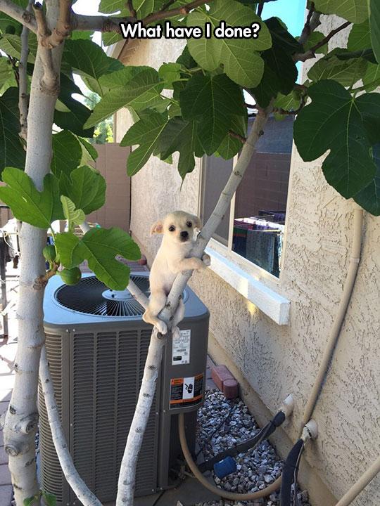 funny-puppy-regret-climbing-tree