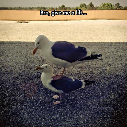 Seagull Doesn