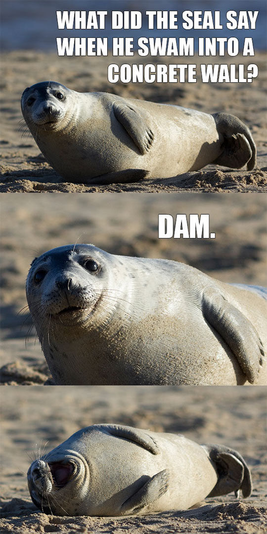 funny-seal-concrete-wall-joke