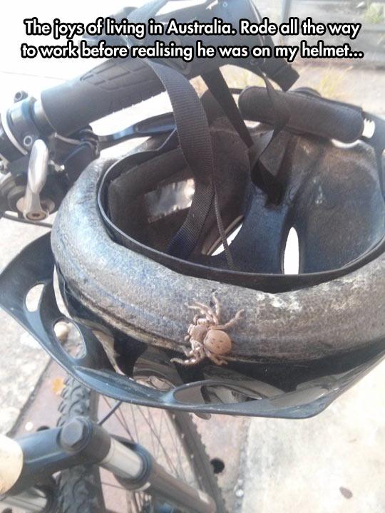 funny-spider-helmet-Australia-bike