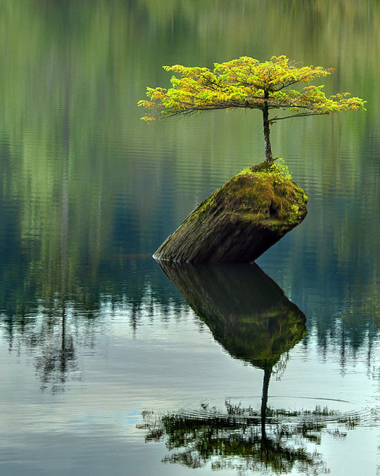 funny-tree-lake-wood-growing