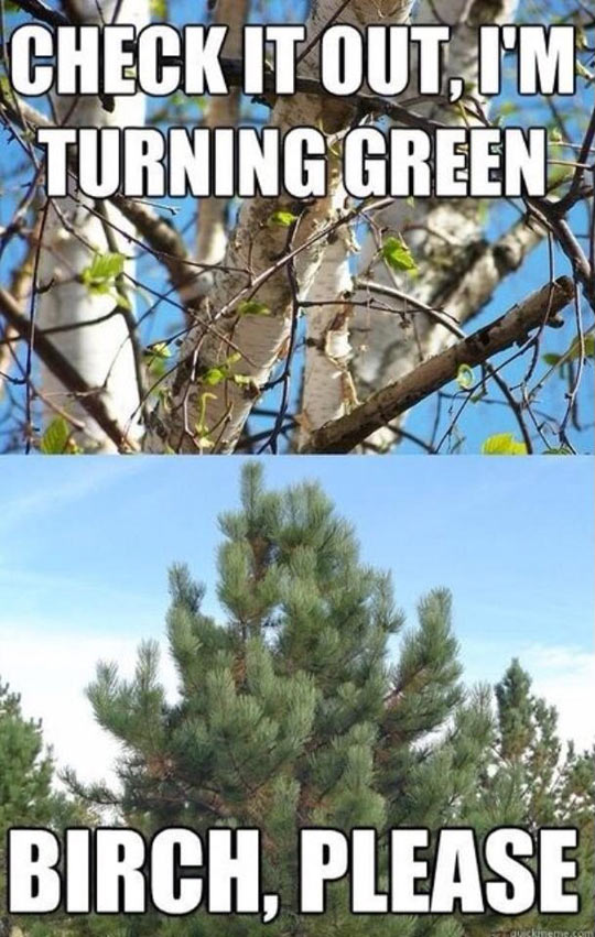 There Always Has To Be That One Tree