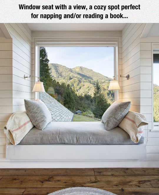funny-window-bed-pillow-view-forest