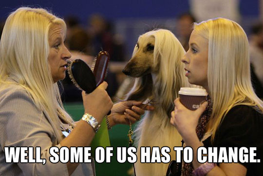 funny-women-dog-same-hairstyle