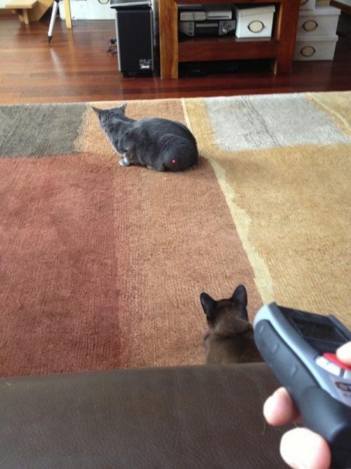 people-jerks-cat