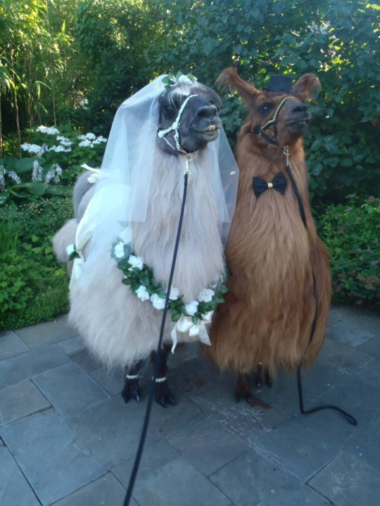 what a beautiful wedding