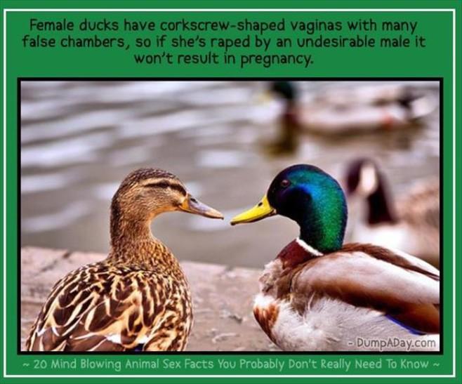 Animal-Sex-Facts-11