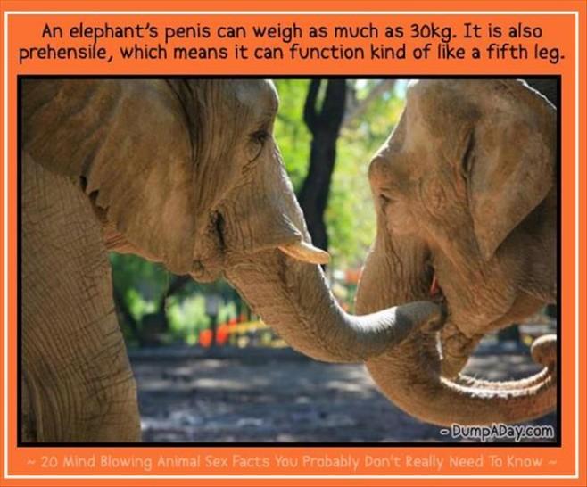 Animal-Sex-Facts-17
