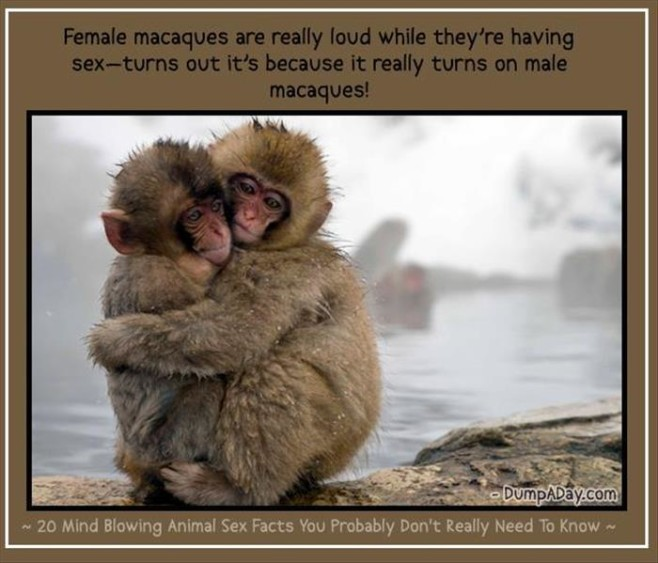 Animal-Sex-Facts-6