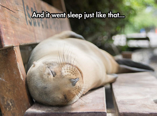 Baby Seal Tired After Night Of Clubbing