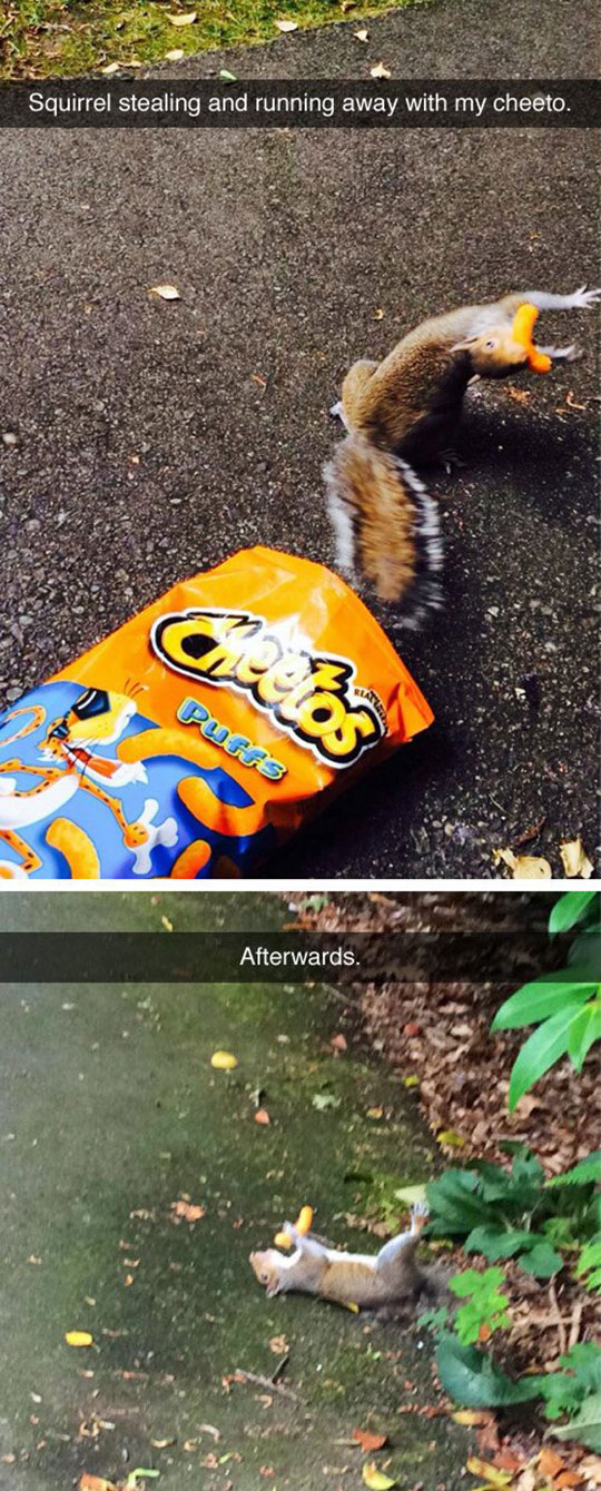 Can't Handle The Cheeto Joy