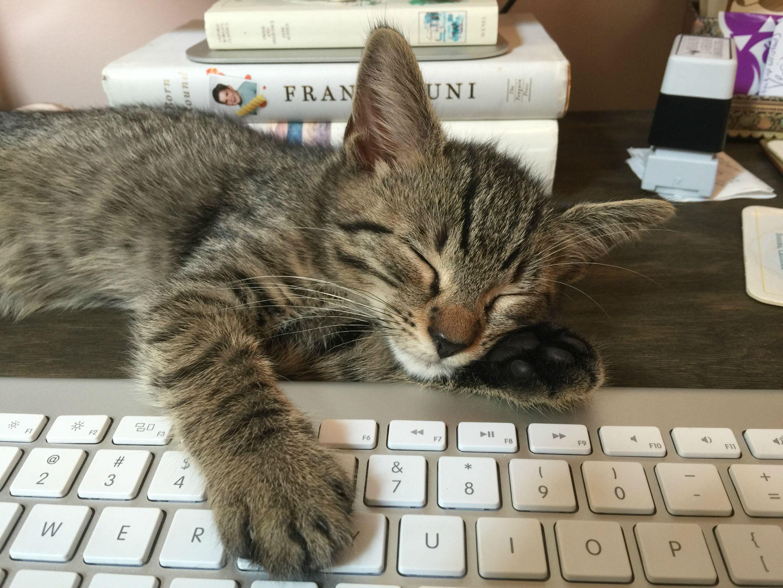 Cat on a keyboard