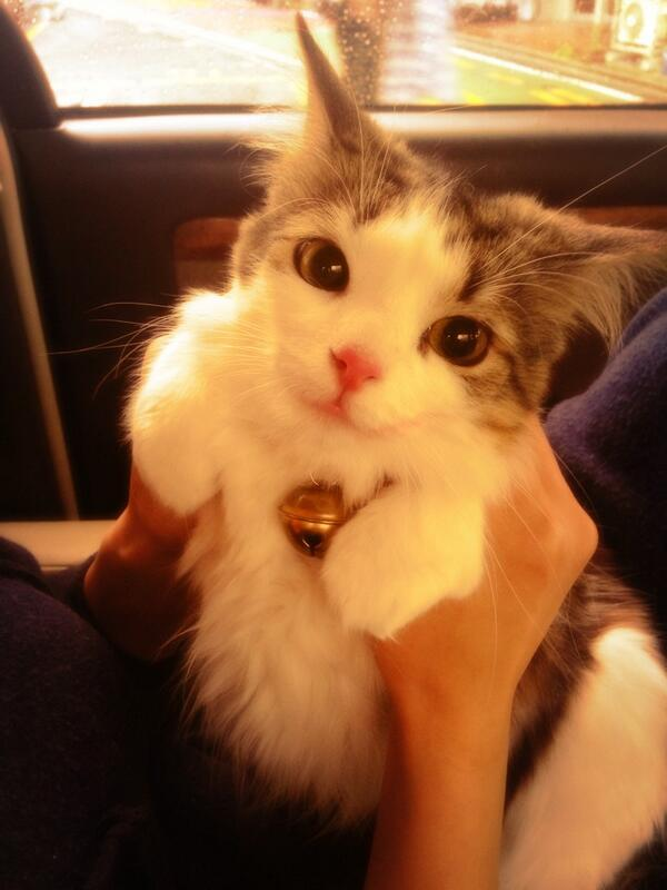 Cutest cat ever.