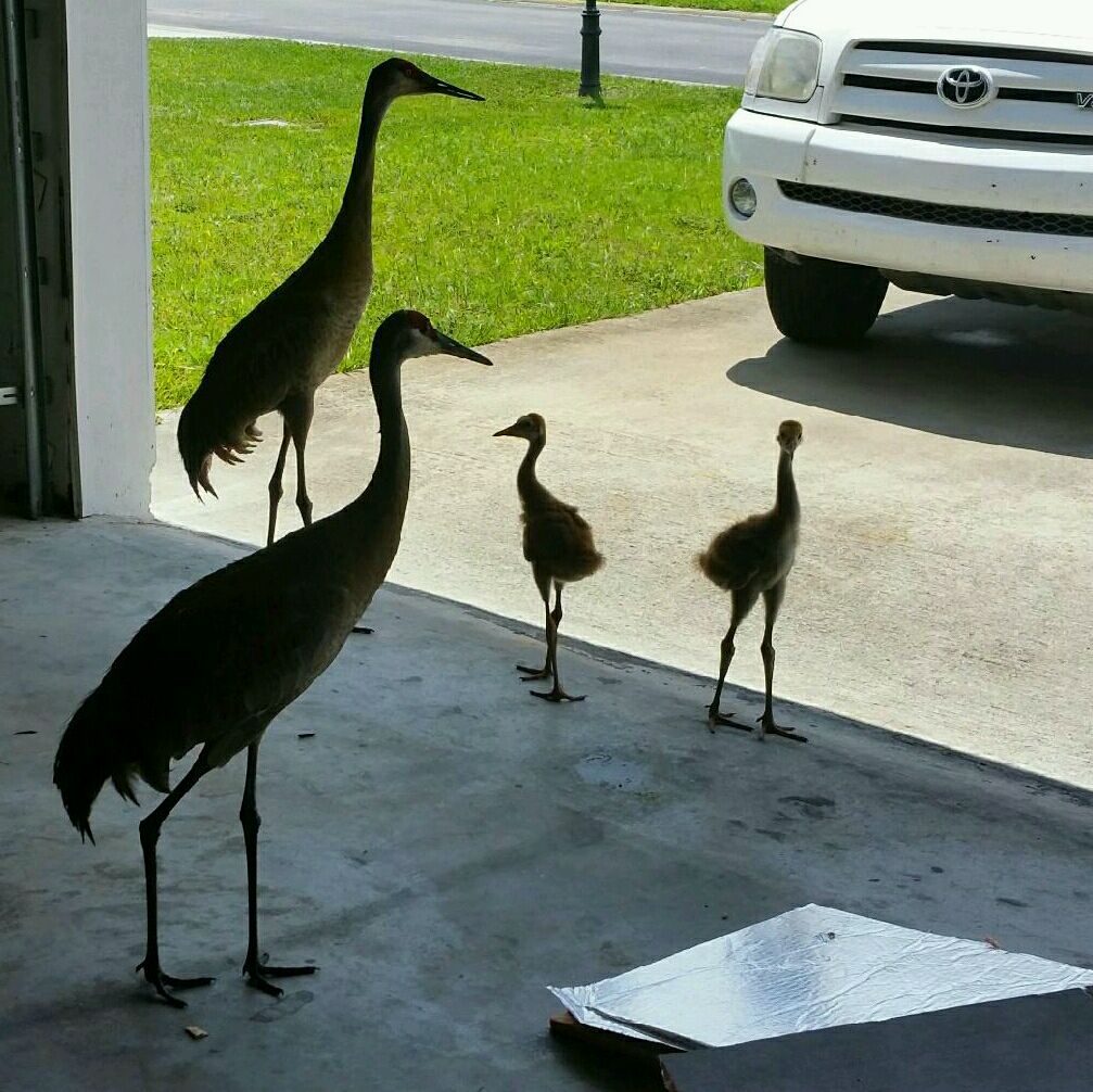 Got a visit from this family today