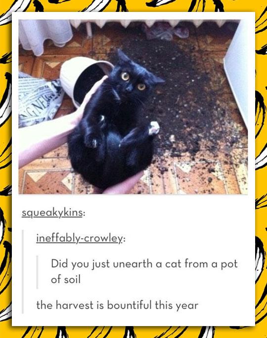 Harvesting Cats