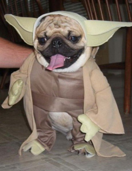 Is It Wrong To Dress My Dog Up Like This