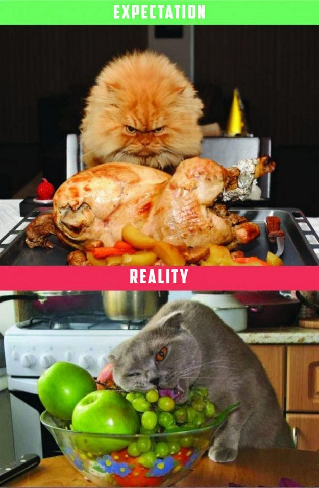 Life-with-a-Cat-Expectations-vs-Reality-07