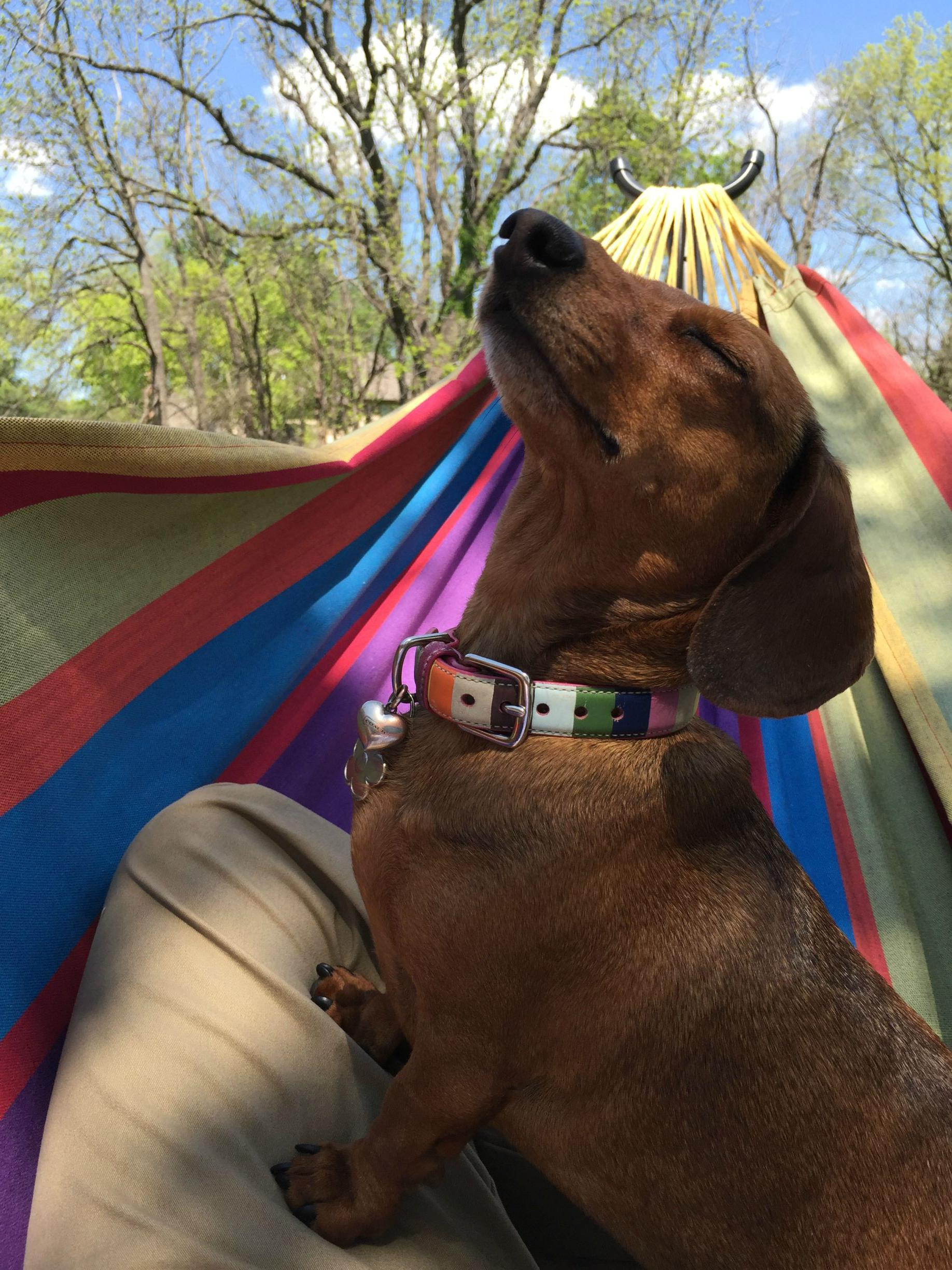 My dog is enjoying this hammock on a much deeper level than me.