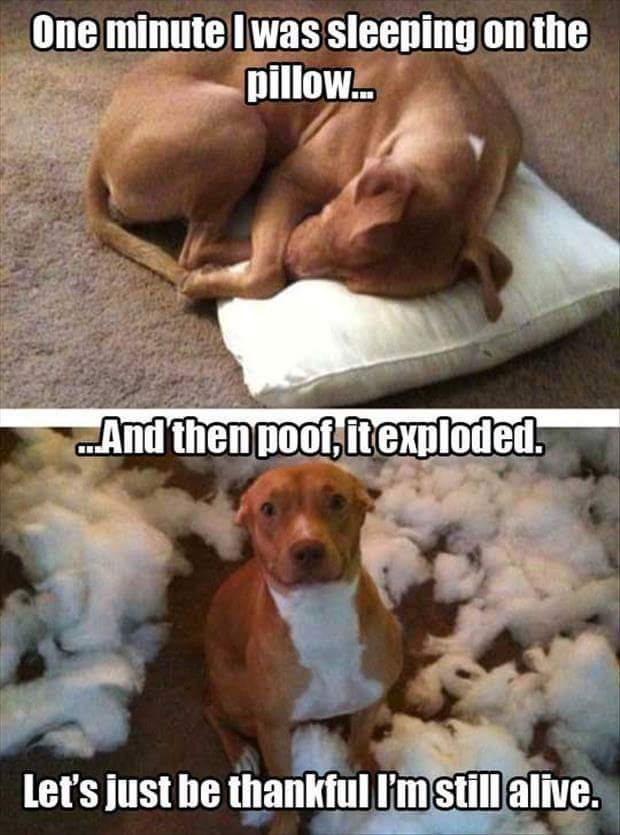 The Pillow Exploded
