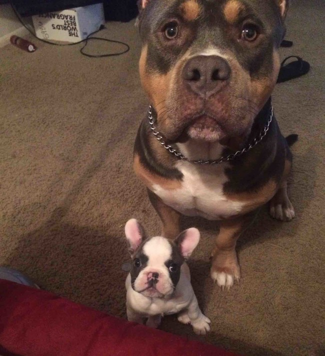 These Pooches Are Absolutely In LOVE With The New Family Puppies...Aww17 - Copy