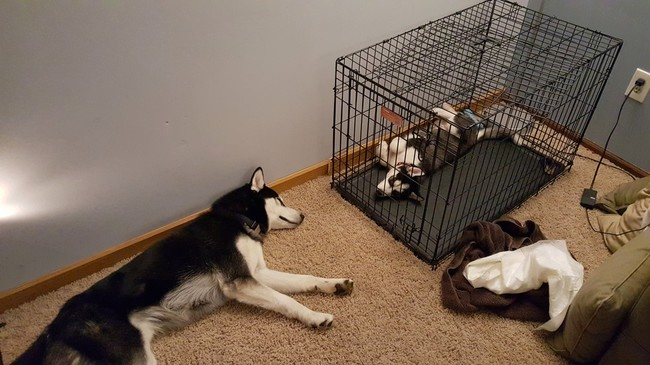 These Pooches Are Absolutely In LOVE With The New Family Puppies...Aww18 - Copy
