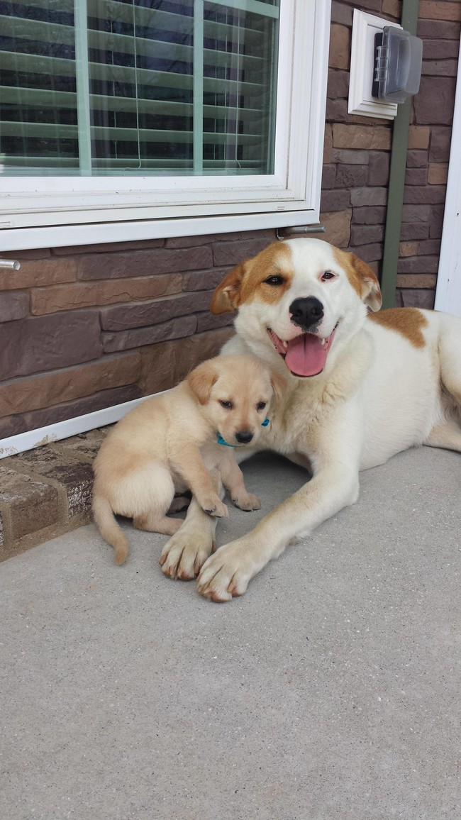 These Pooches Are Absolutely In LOVE With The New Family Puppies...Aww4