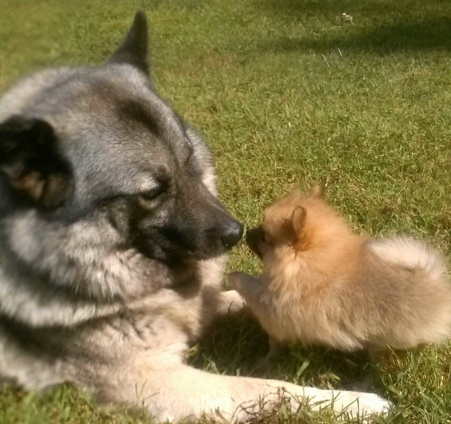These Pooches Are Absolutely In LOVE With The New Family Puppies...Aww5