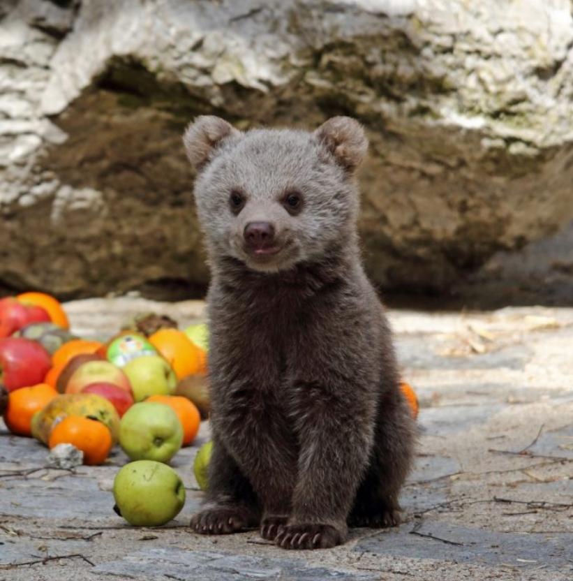 Tiny happy bear cub.