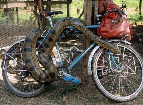 bike-fail-snake