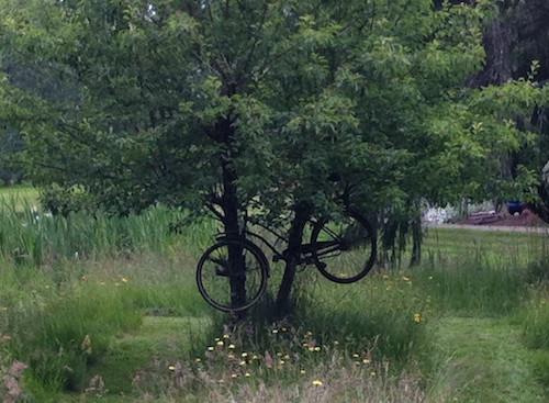 bike-fail-tree
