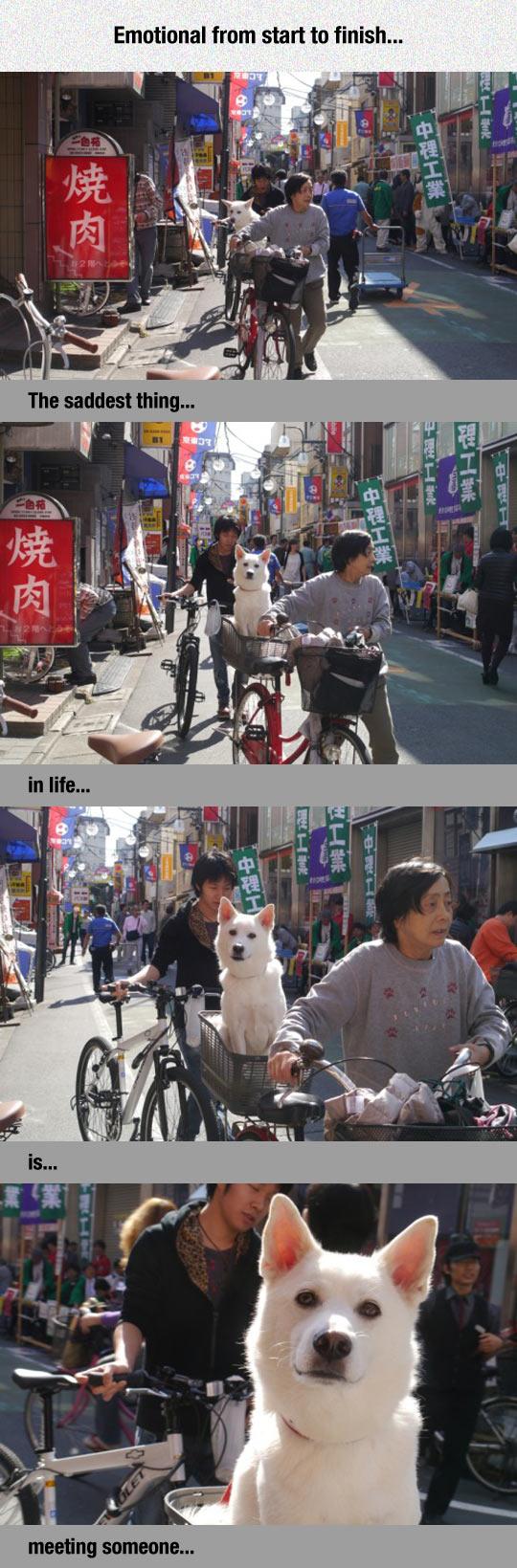 cool-Asian-man-dog-bike