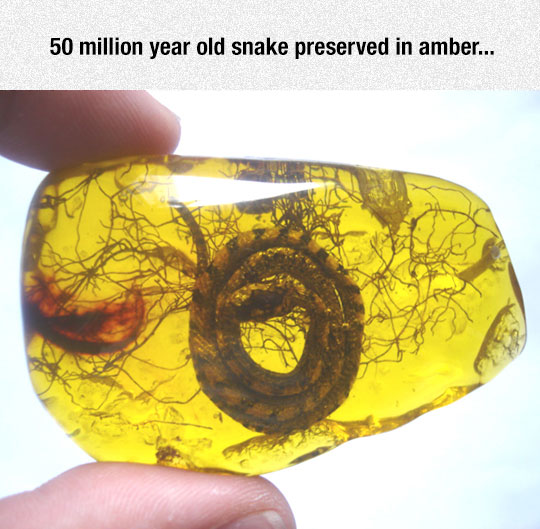Jurassic Snake Park Is Coming?