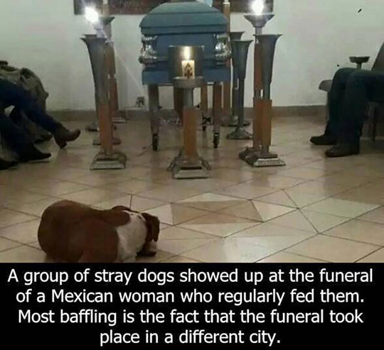 Some Angels Have Four Legs