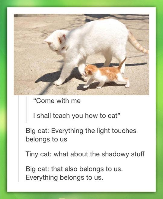 cute-cat-little-big-lesson