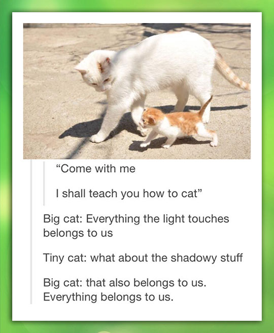 How To Be A Cat Lessons