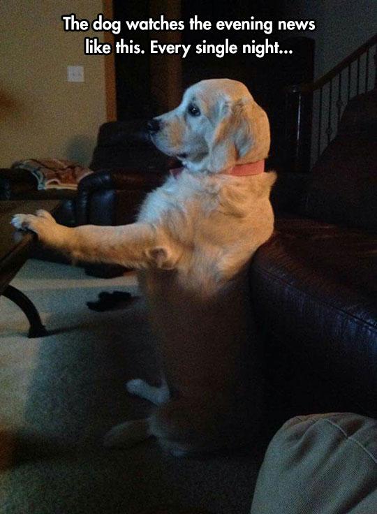cute-dog-sitting-watching-news