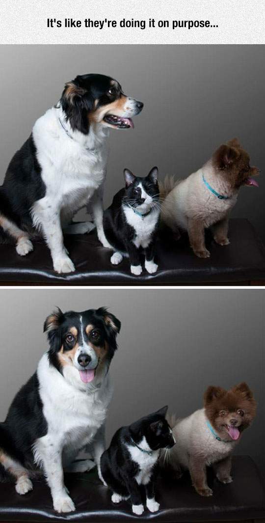 cute-dogs-cat-looking-photo-shoot