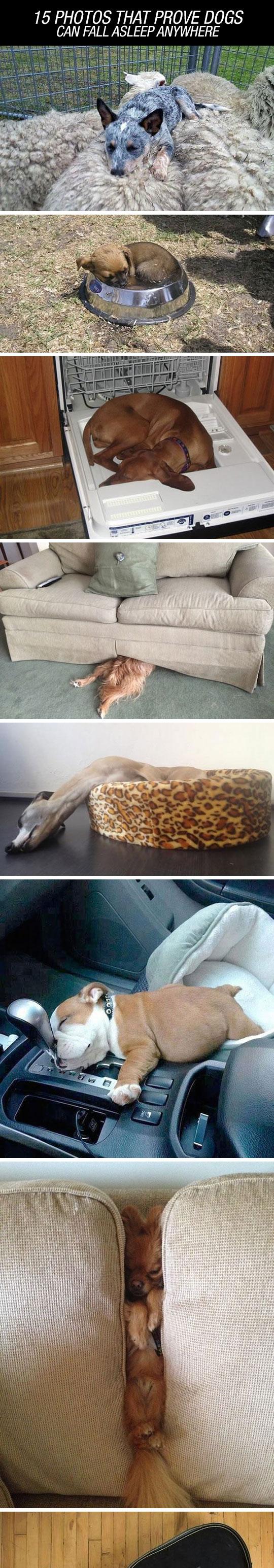 They Sleep Everywhere