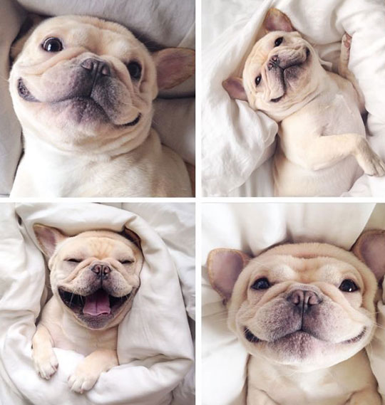 cute-happy-smiling-puppy-bed