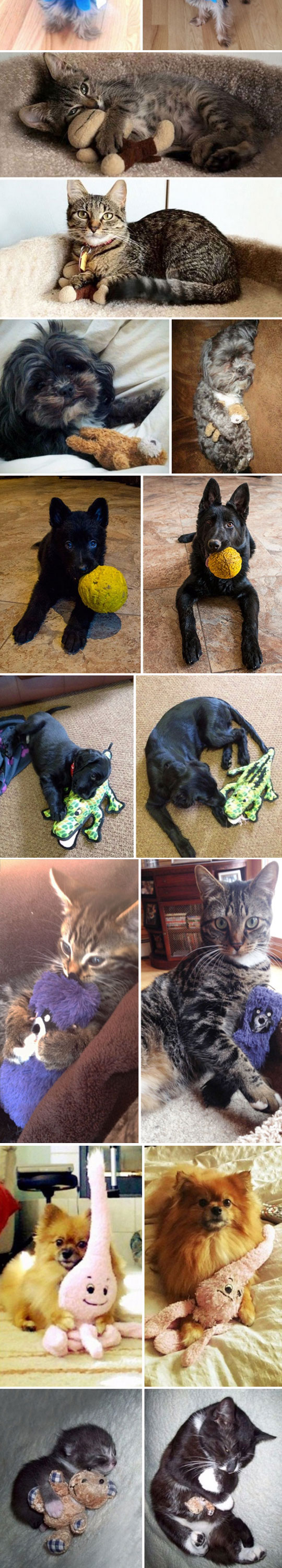 cute-pets-dogs-cats-sleeping-toys