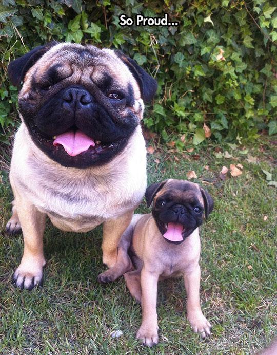 Pug And Pug Light