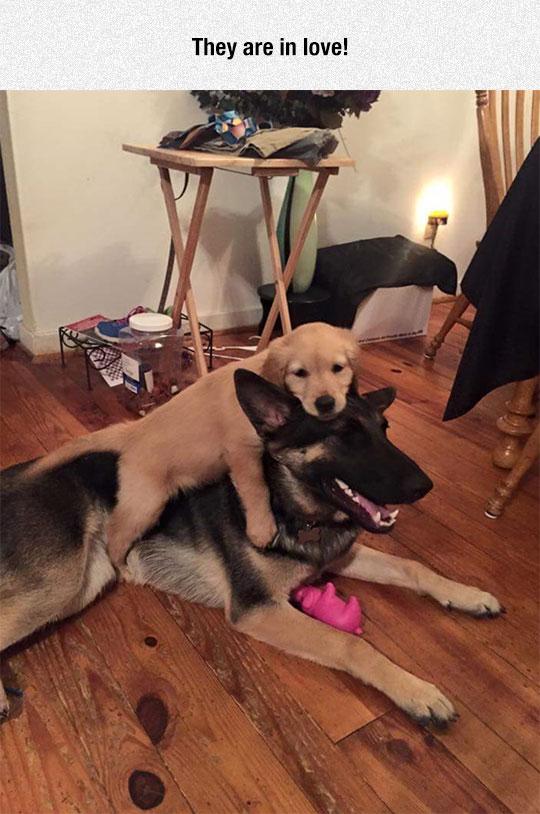 cute-puppy-riding-dog-love