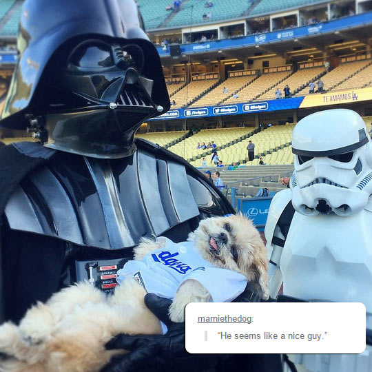 funny-Darth-Vader-dog-cute-game-field